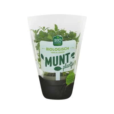Huismerk Biologisch Munt Plantje
