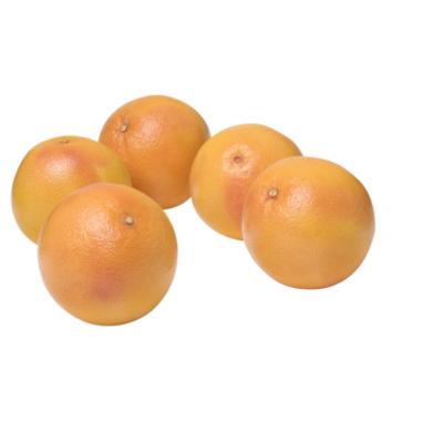Huismerk Rode Grapefruit (1 KG 3 à 5 stuks)
